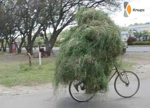 de tuin mee op de fiets
