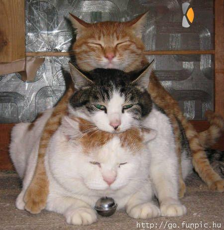 kat op kat op kat