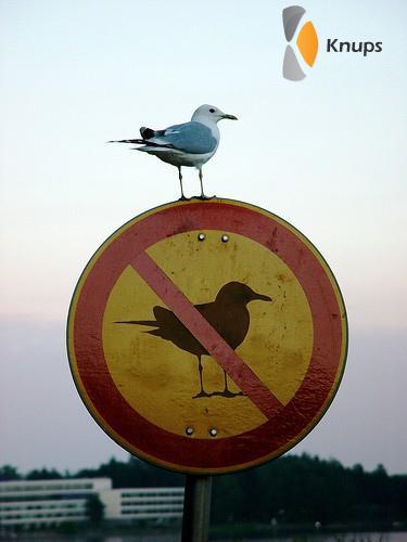 verboden voor vogels