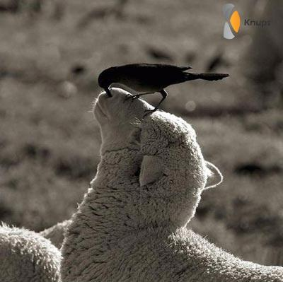 eigen neuspeuter vogel