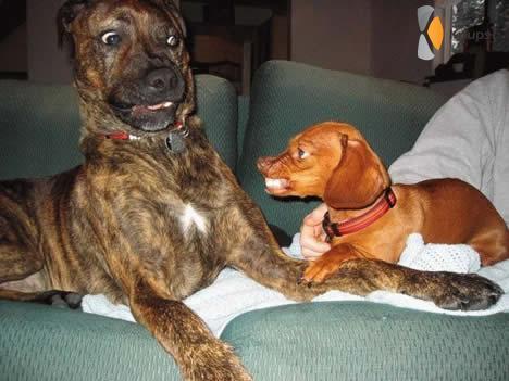 bang voor kleine hond