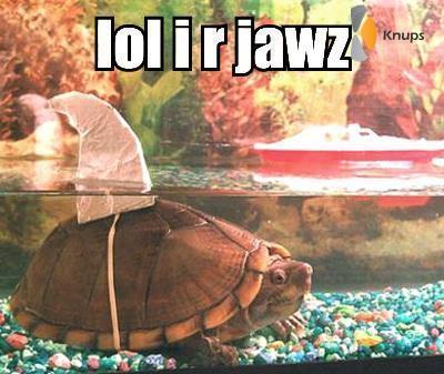 schildpad haai