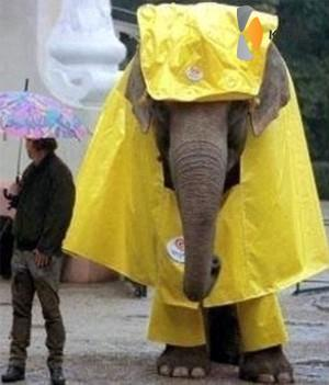 olifant met poncho
