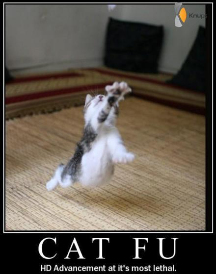 kung fu poes