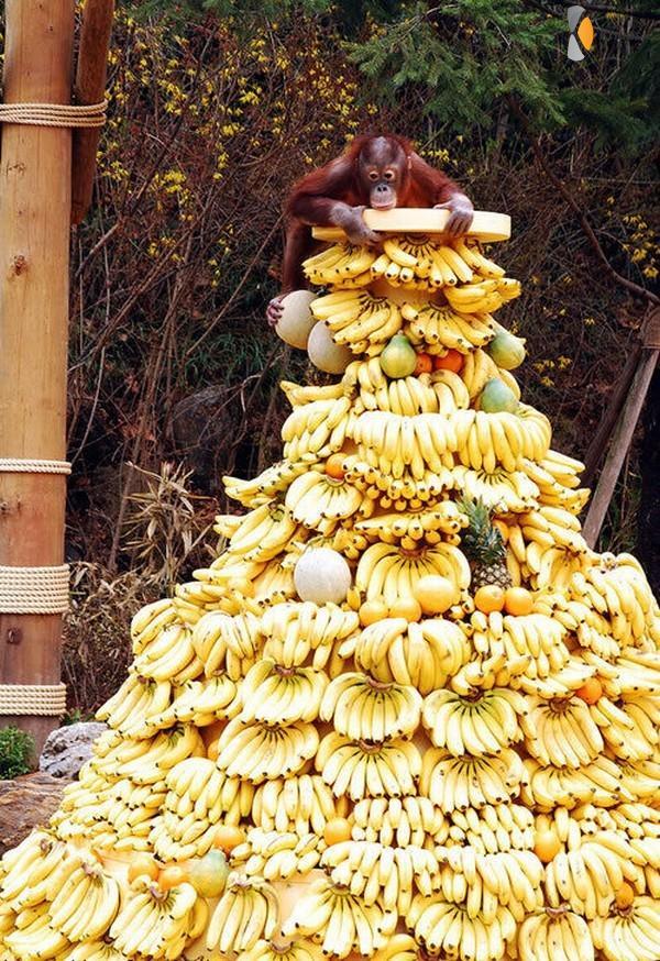 genoeg bananen voor komende week