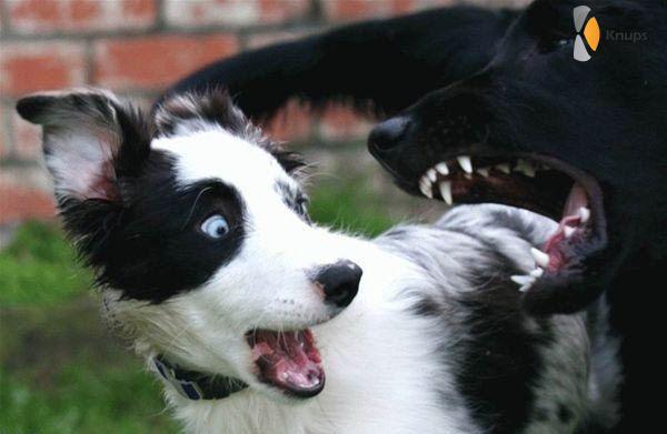 dat zijn scherpe tanden!