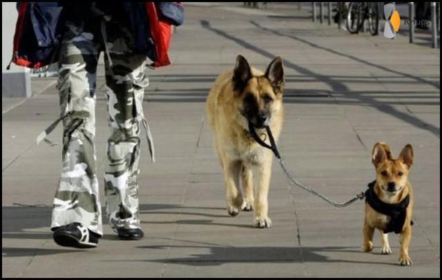 hond laat hond uit