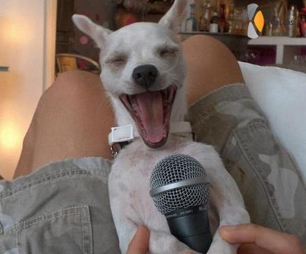 zingende hond