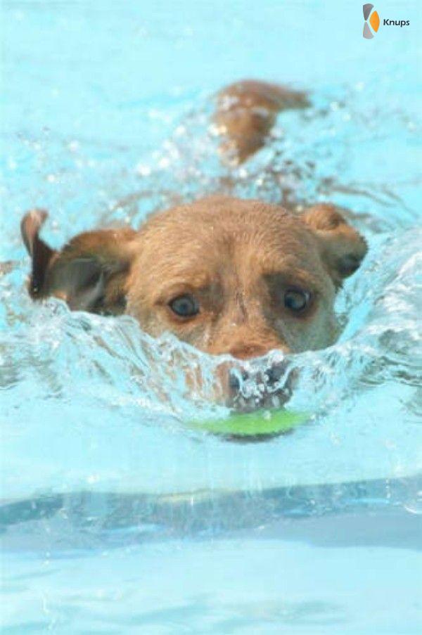 onderzeeer hond