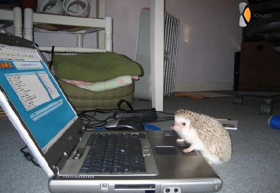 egel zit te computeren