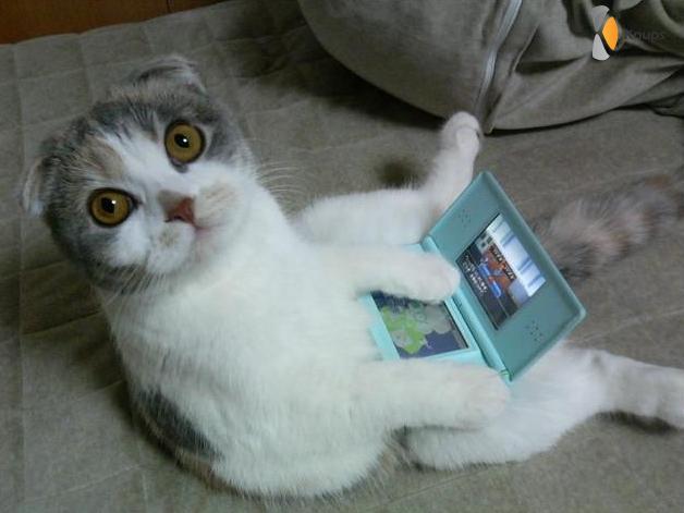 kat stiekem aan het gamen