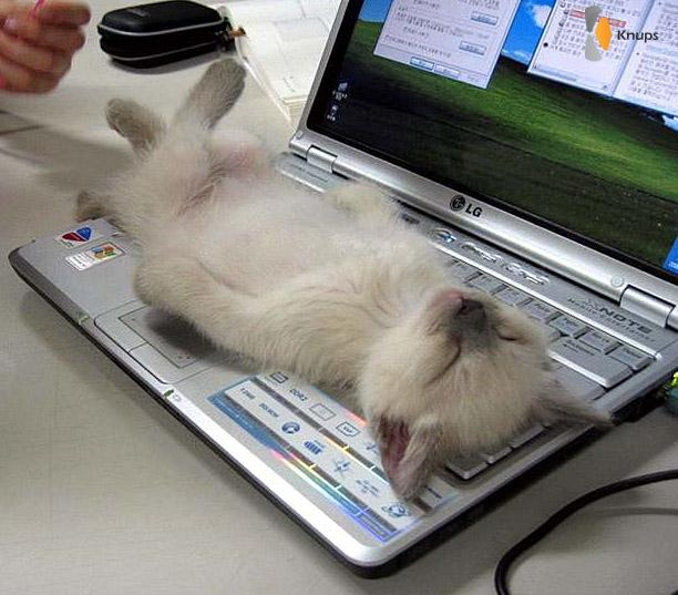 kat slaapt op laptop