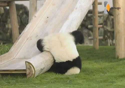 gevallen panda