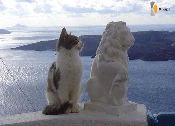 kat wil een leeuw zijn