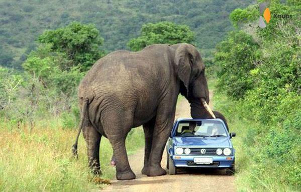 vriendelijke olifant