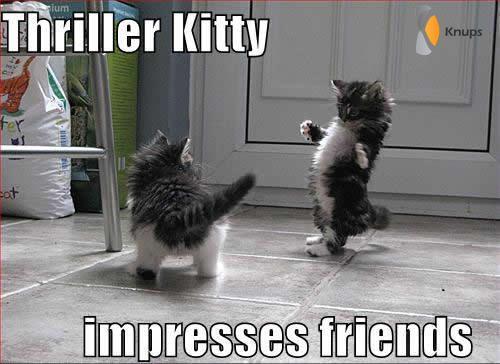 katten verschrikken van elkaar