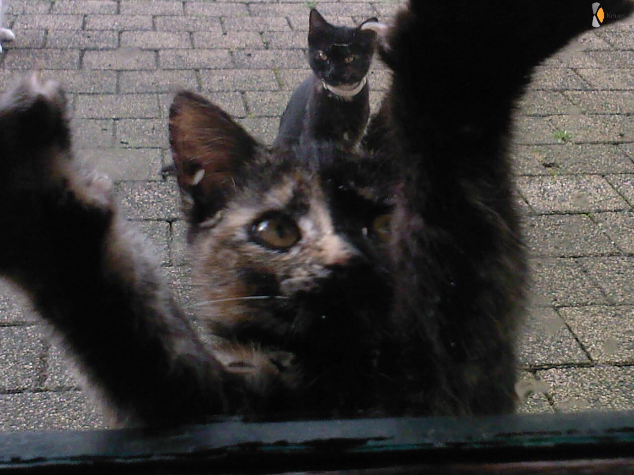 laat me binnen!