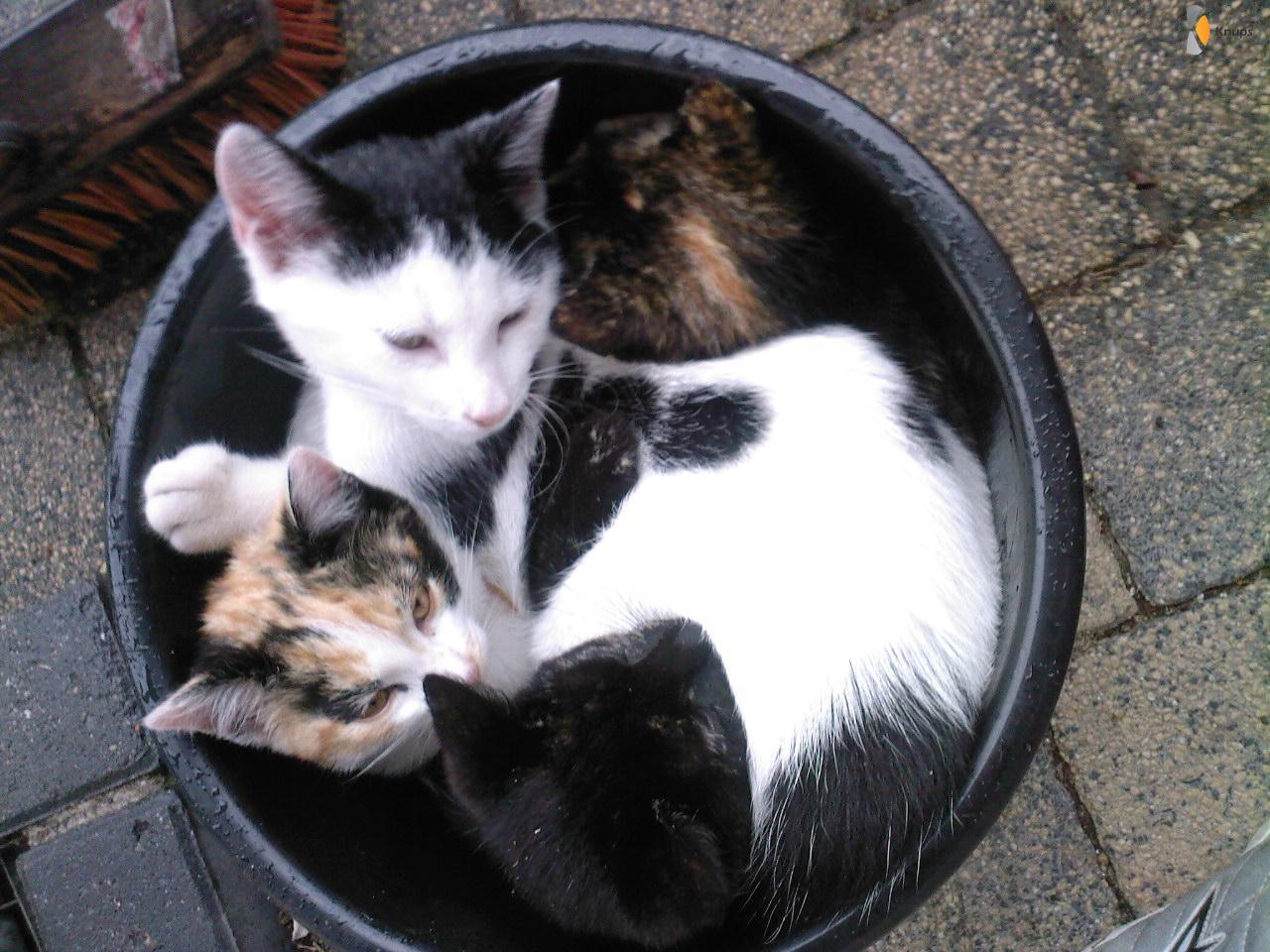 emmer vol katten
