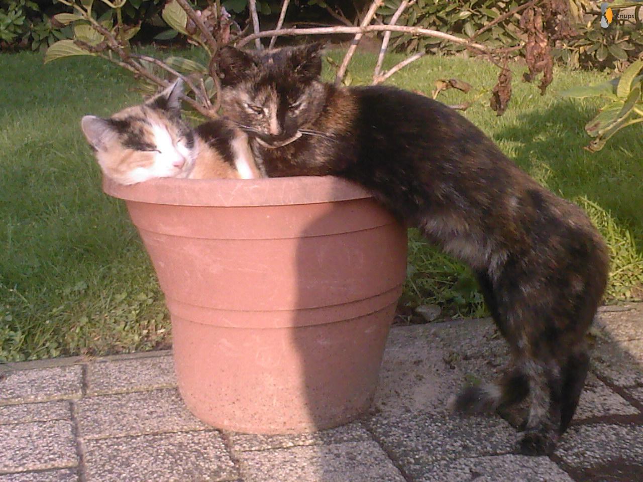 2 katten kunnen er net niet in, dan doen ze het zo maar