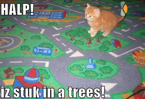 katje zit vast in een boom