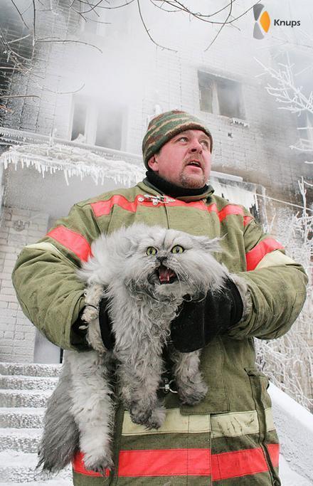 koude & bange kat