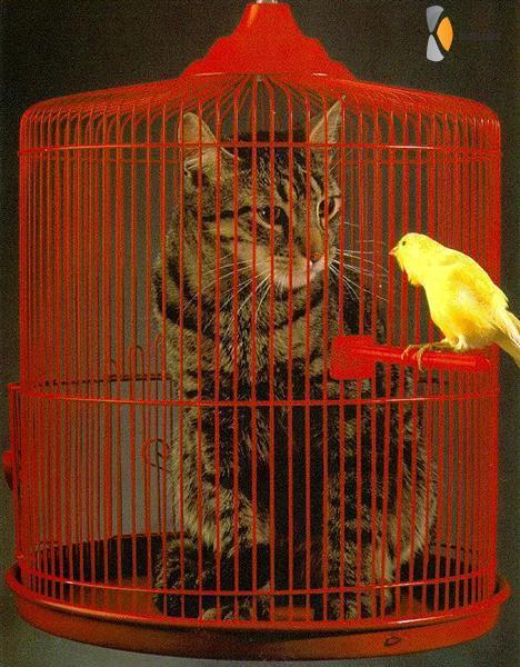 kat in vogelkooi