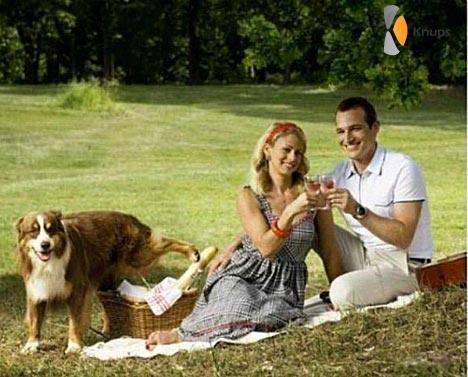 hond pist in picknickmand