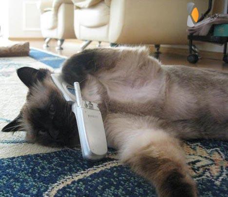 kat die belt