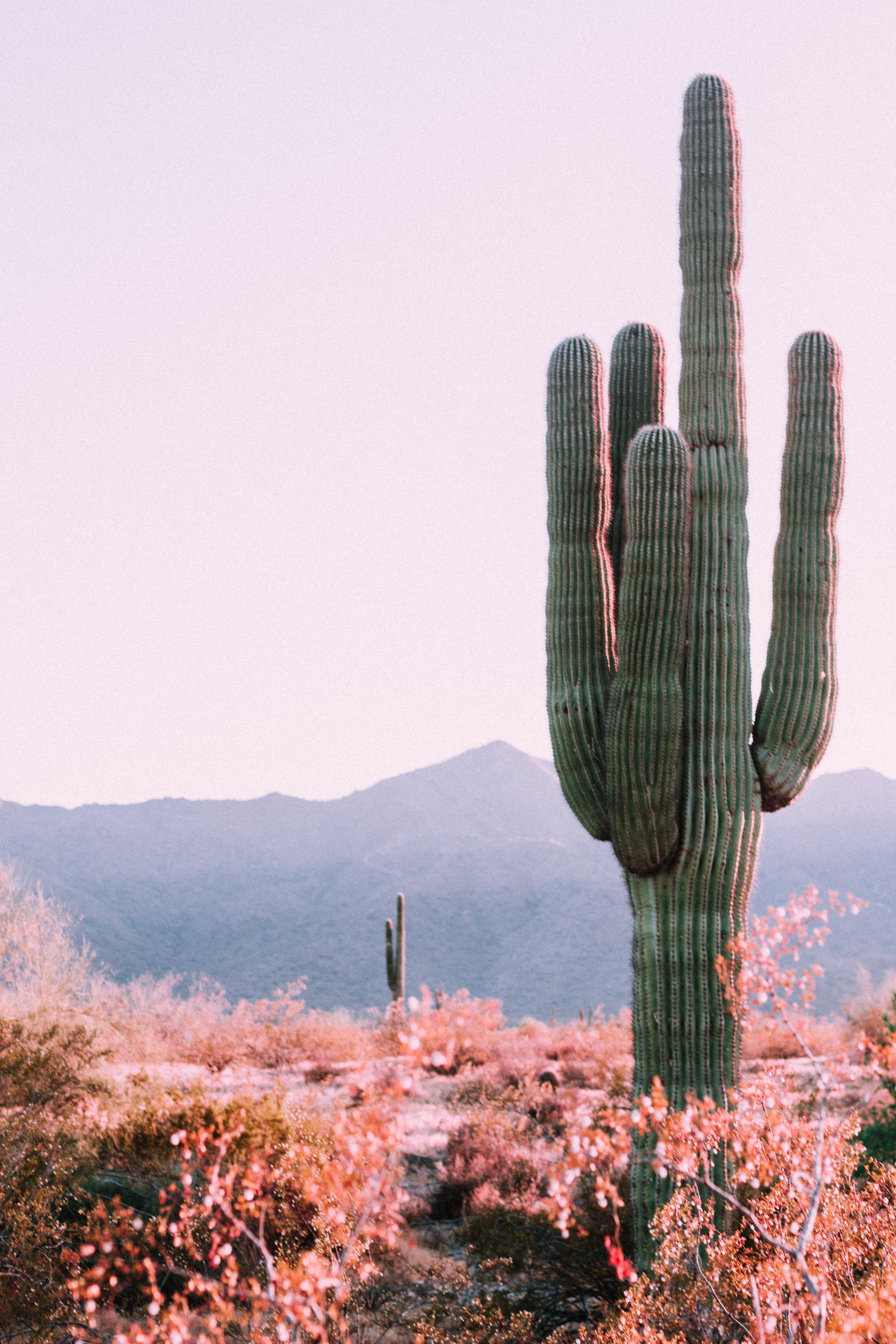 Grootste cactus ter wereld