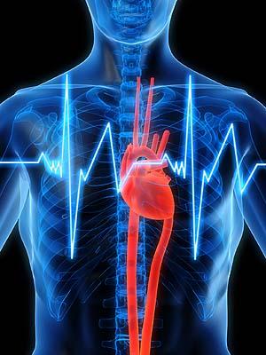hart zit links, niet in het midden